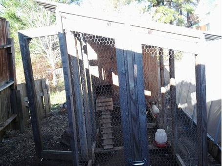 Chicken coop tractor and chickens